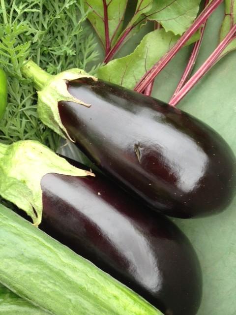 deux aubergines